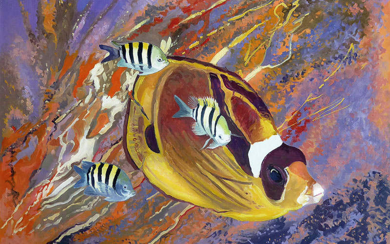Raccoon Butterflyfish with sergeant majors.