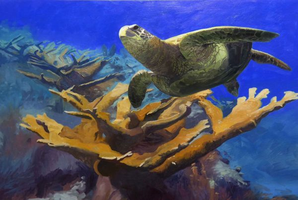 Green Turtle and Staghorn Coral