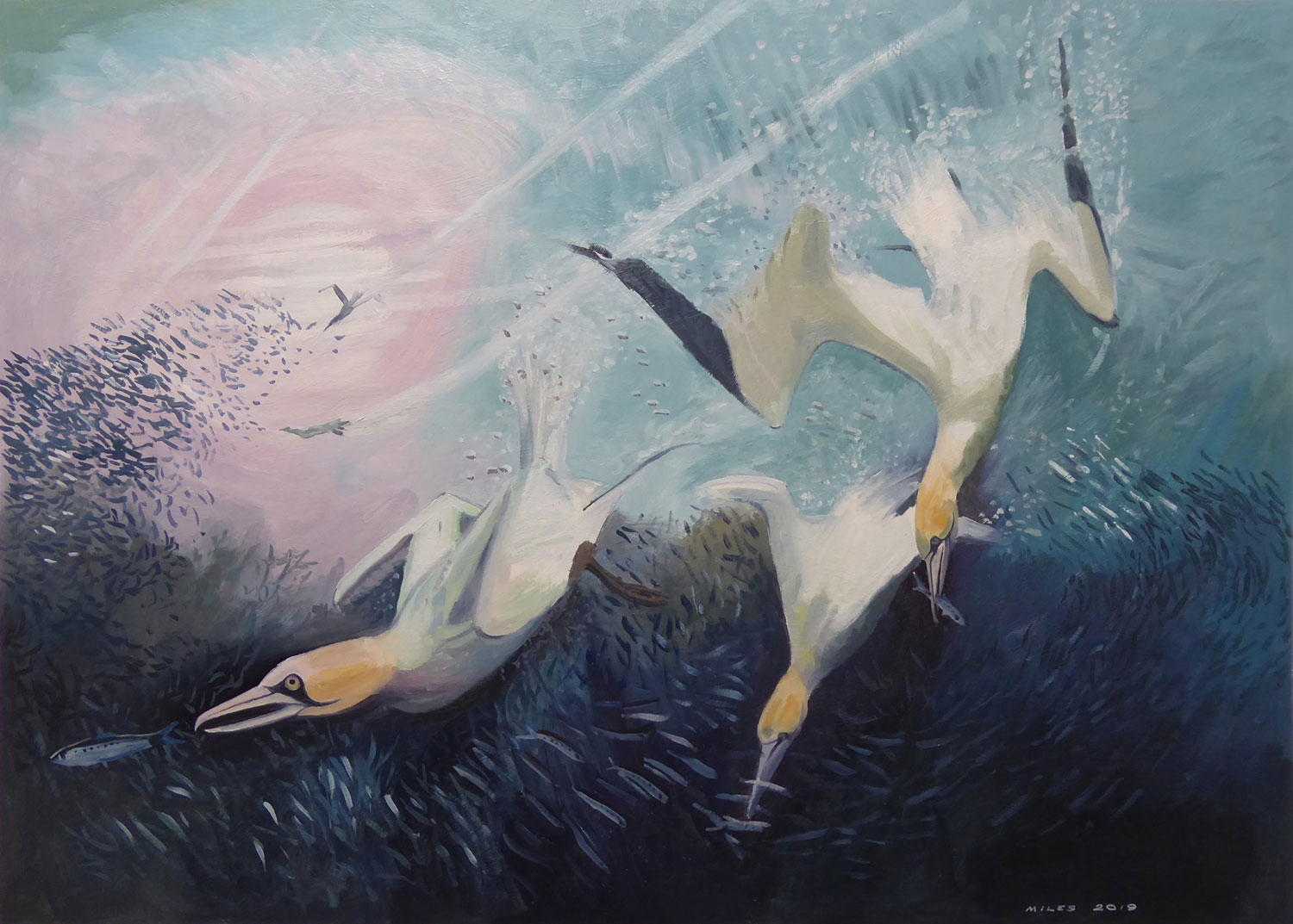 Underwater painting of Gannets diving on a bait ball by Gerry Miles