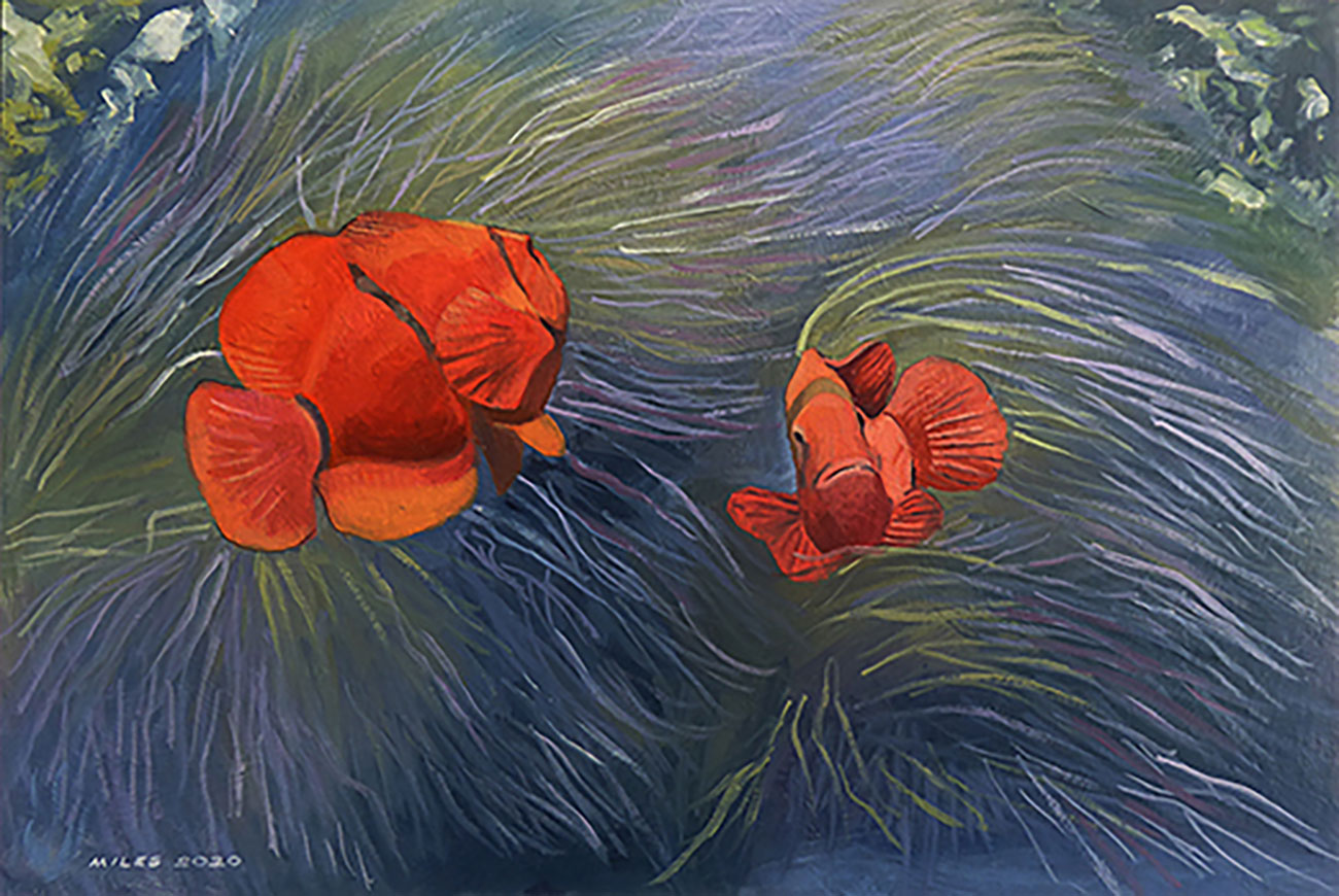 Clown fishes in an anemone
