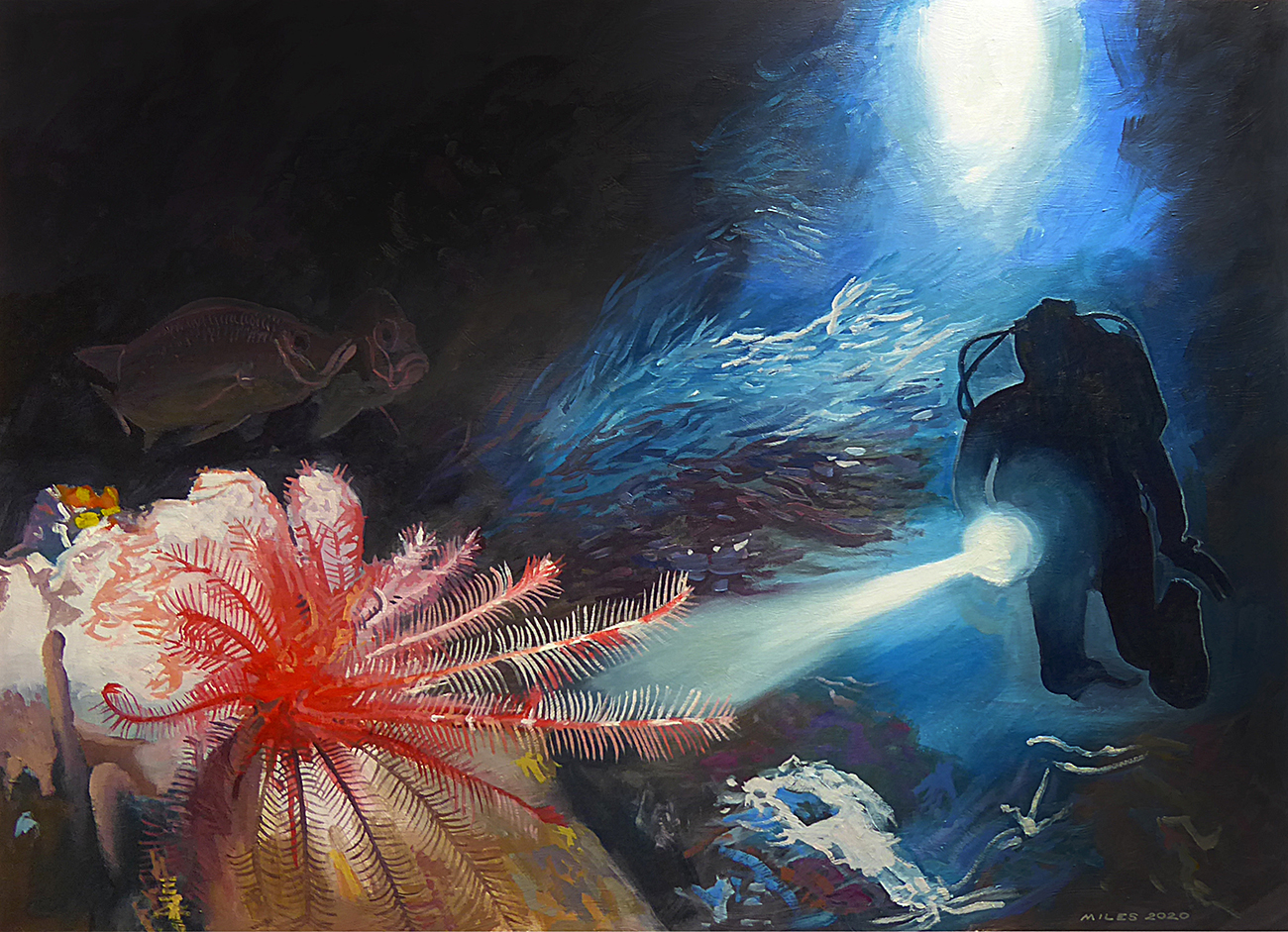 A featherstar caught in the glare of a diver's torch.