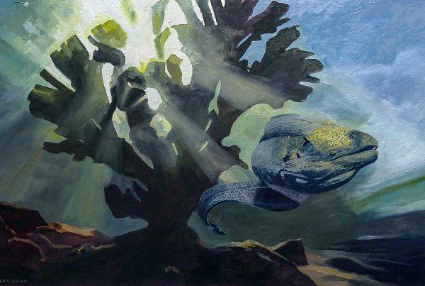 Giant Moray eel free swimming