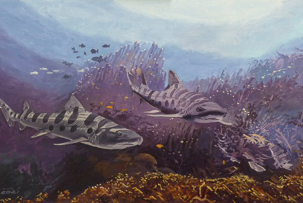 Leopard sharks cruising along a coral reef.