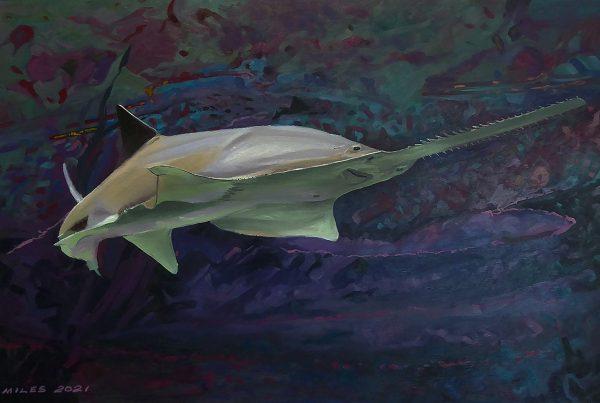 portrait of a sawfish