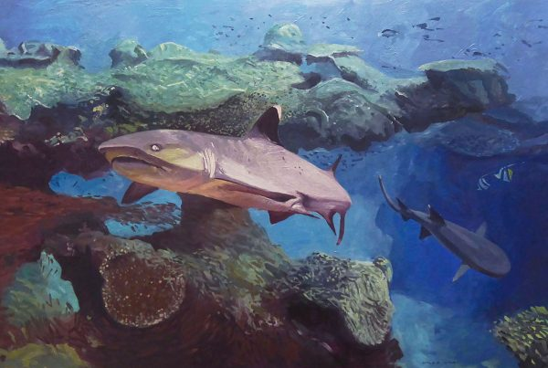 The whitecap reef shark is the most common shark found on coral reefs.