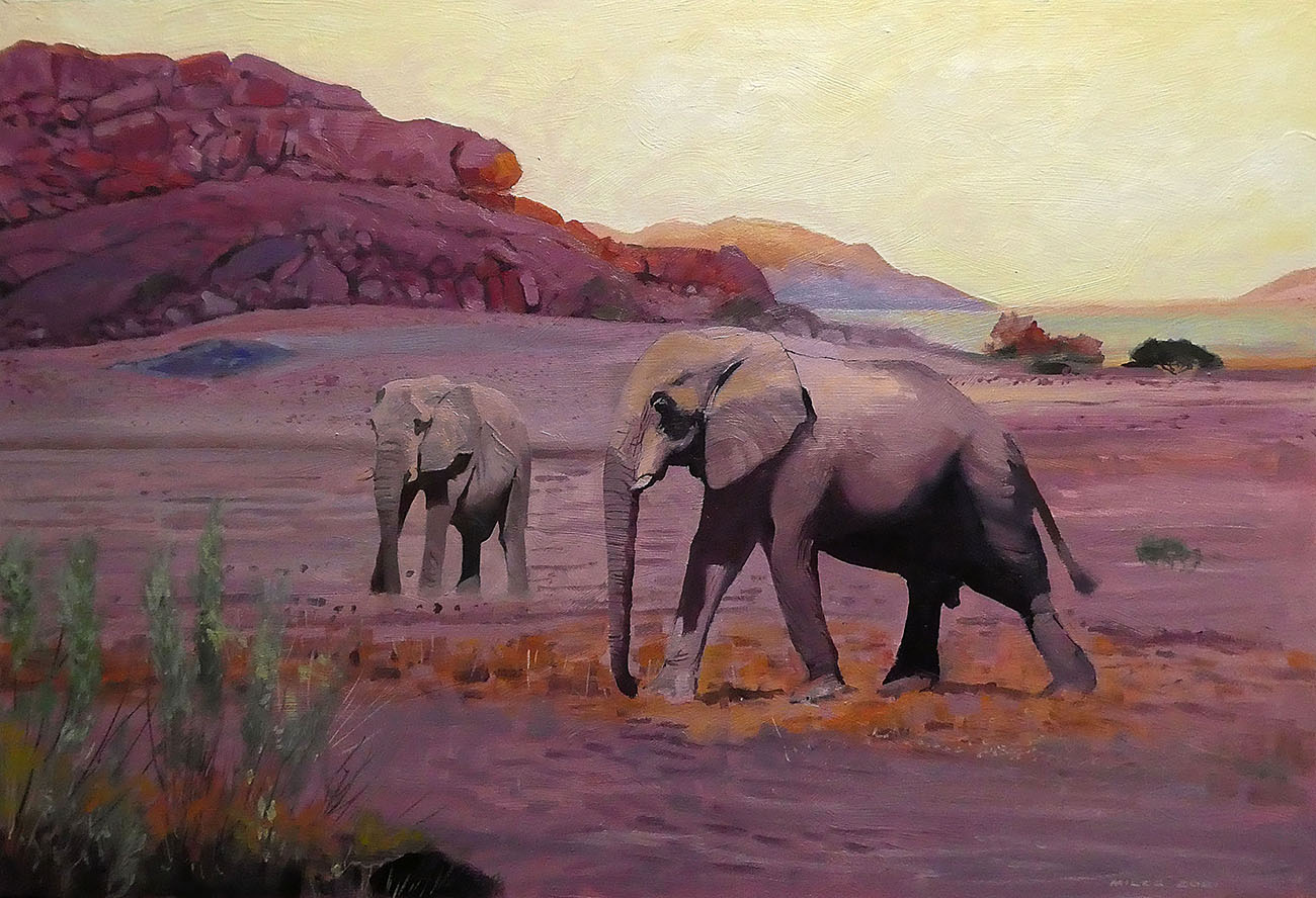 The lonely existence of old bull elephants